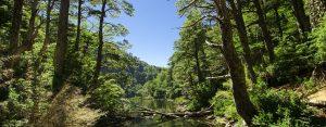 Trekking Parque nacional Huerquehue
