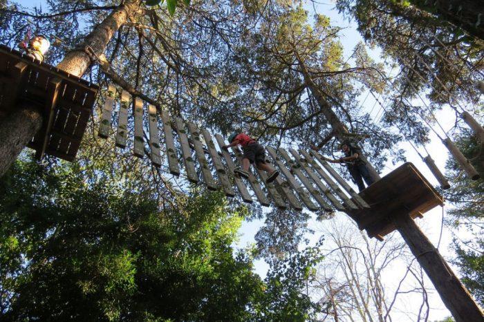 Arborismo Pucon